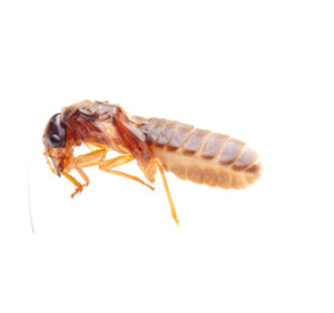 Call our termite control professionals today! (954) 906-1636